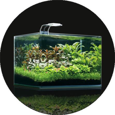 ENAC 2019 - Bewertungsrichtlinien Aquascaping